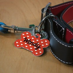 Tags & Collars